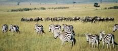 19. - 29. Oktober 2018 Masai Mara und Diani Beach